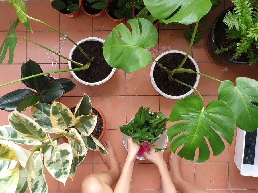 Plant Repotting Workshop Kalamazoo